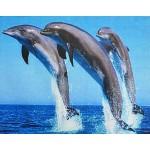 Алмазная живопись малая Три дельфина KHD..