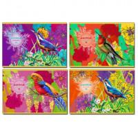 """Альбом для рисования А4 скоба 16л. """"Paradise bird"""" (ассорти)"""